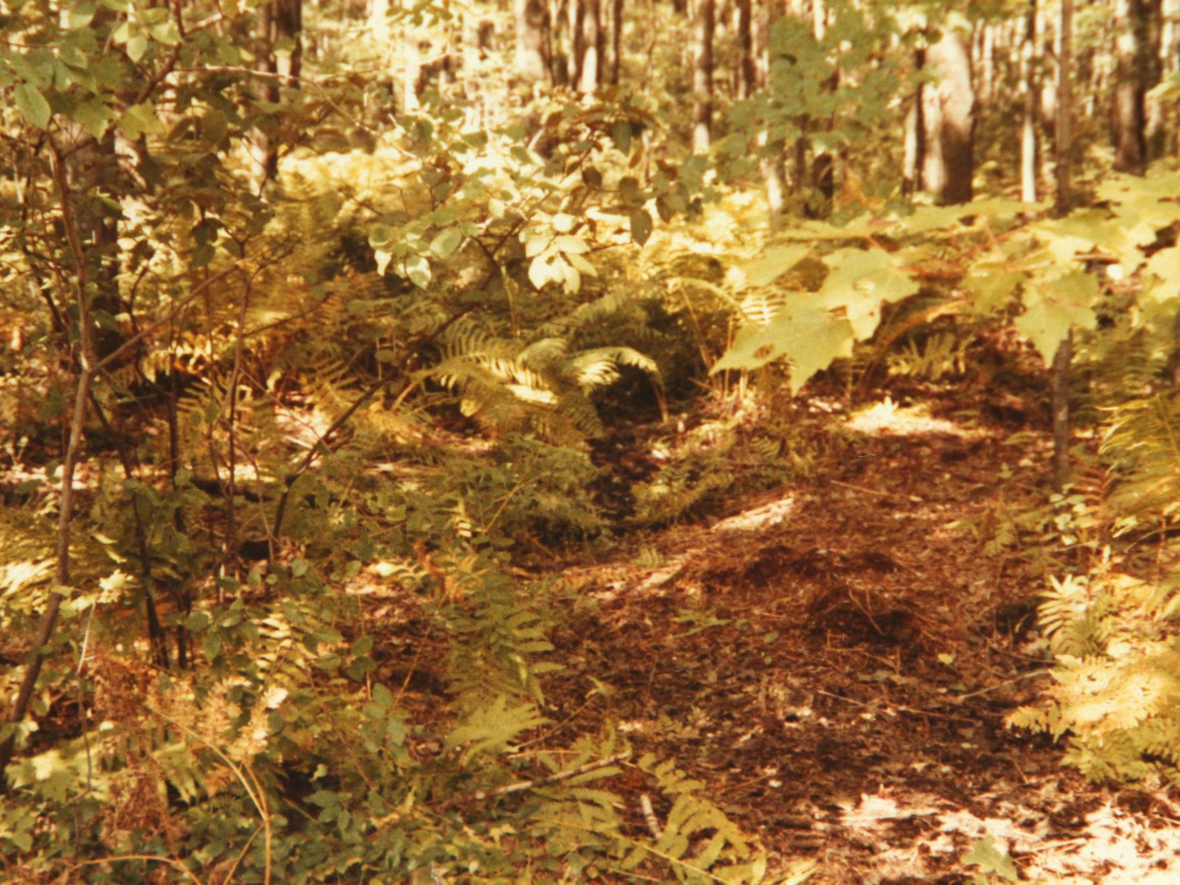 Investigators walked this trail in September 1985 and found the nude, decomposed body of Shawn Moore, a 13-year-old Green Oak Township boy who had been kidnapped, sexually assaulted and murdered.