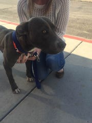 King was among three dogs rescued from a Phoenix area home after officers received a report of abuse in January 2015.