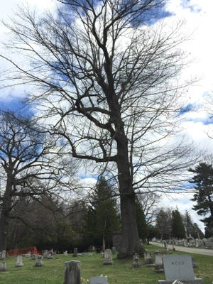 A walk through Mt. Hope Cemetery to look at the magnificent trees could help get 2 1/2 hours of cardio activity a week. Some would call that exercise, which means a lot of people may not go. I'd call it a nice afternoon and see how many people I could get to go with me.