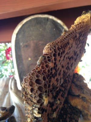 In this photo provided by Trez Garvin, Reed Booth, who removes hives around southern Arizona, holds a honey comb in Arizona on Thursday, June 11, 2015. Arizona has seen a significant number of bee attacks where people and animals have been stung and hospitalized in recent weeks.