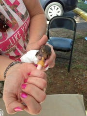 Cindy Carson of WERLA feeds a baby squirrel during the 2015 Wildlife & Forestry Festival at the Bodcau WMA.
