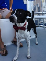 Seafaring canines and their owners can enjoy a cruise along the Caloosahatchee River with Pure Florida during the next Bark on the Ark on July 16..