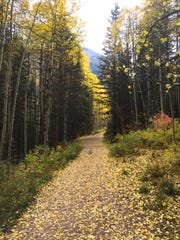 The leaves start to change along the Bear Creek Trail in Telluride, Colo., on Tuesday, Sept. 29, 2015.