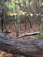 Hikers don't let rain keep them from enjoying last of fall colors