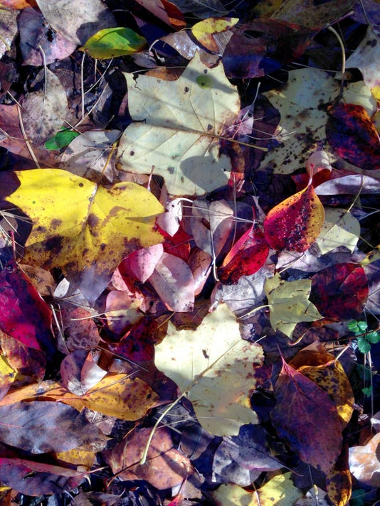 autumn leaves underfoot