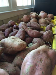 Bins of sweet potatoes gifted by Delvin Farms to the
