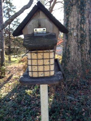 Holiday seed bells and high-energy suet are welcomed additions for feeding birds