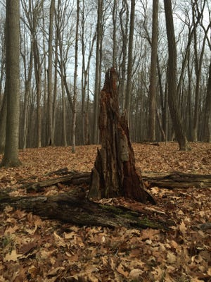 Trail 2 wends through woods where decay is beautiful.
