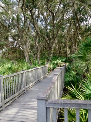 The nature boardwalk at the Merritt Island Wildlife Refuge offers well-maintained paths that wind beneath a mossy canopy