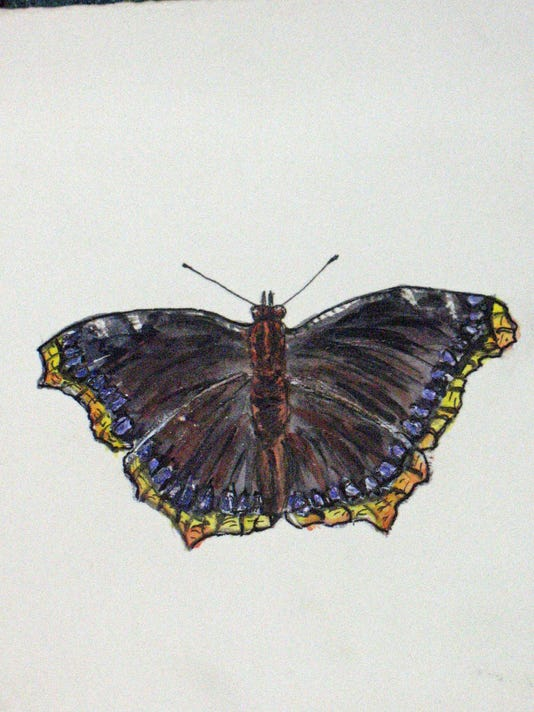 16 Mourning Cloak Butterfly