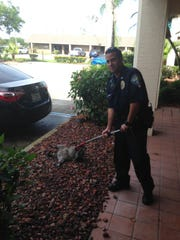 A Palm Bay police officer helped capture an unusual suspect in a burglary call earlier today