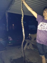 Tabith Blaney holds the 75-inch long black rat snake