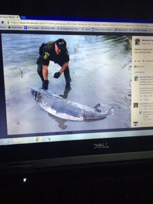 The Vermont Game Warden Association posted a photo of a 6-foot-9-inch dead sturgeon on Facebook this past weekend after the homeowners reported that the fish had washed ashore.