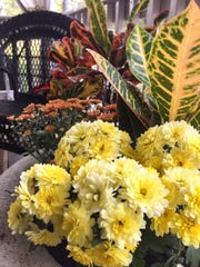 Choose from a variety of seasonal plants for your fall container garden.