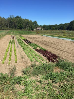 It's time to clean out your vegetable garden or plant a cover crop.