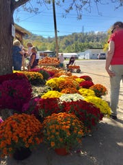 People search for mums and pumpkins at McGlasson's Farm on River Road in Hebron on Oct. 16, 2016.