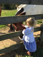 A little girl pets a horse at Cool Breeze Stables in
