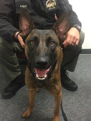 K-9 Wicked and his partner, Cumberland County Sheriff's
