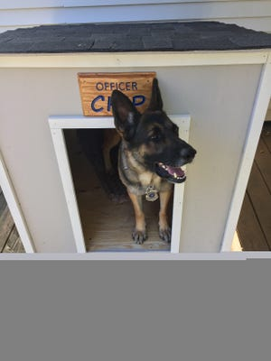 Greece Police Department K9 officer Chip in his new dog house made by Evan Trabold, 17, of Boy Scout Troop 195 as part of his Eagle Scout project.