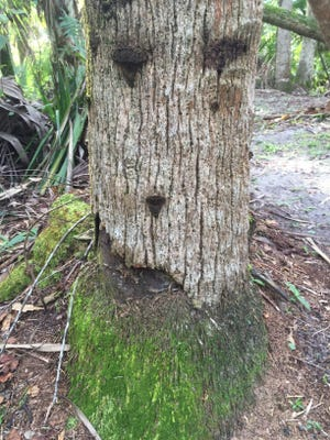 Get out and explore St. Lucie County preserves with weekly guided hikes.
