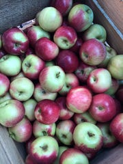 Apples will be available at the Milford Farmers Market