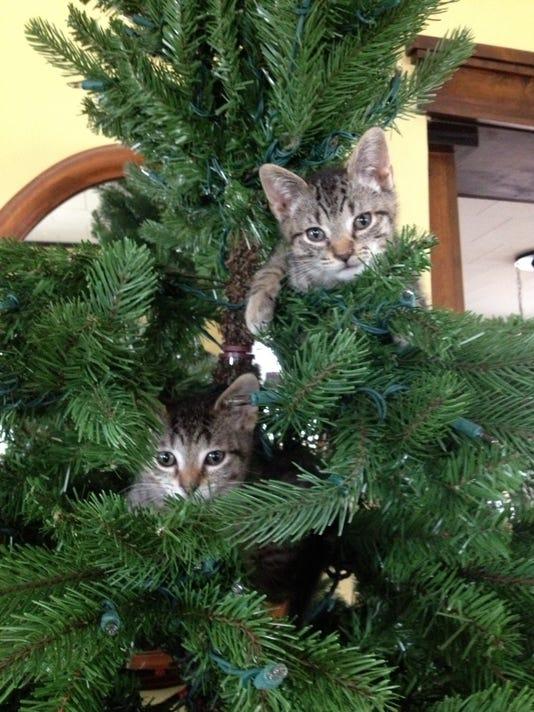 636161151617950344-kittens-for-lisa.jpg