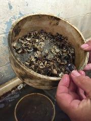 John Ewart, the shellfish aquaculture specialist at