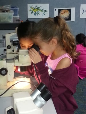 Corpus Christi youths who want to continue learning about science, technology and the natural world are in luck. Summer camps throughout the city offer programs specifically designed to challenge their scientific minds.