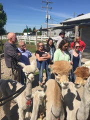 LondonDairy Alpacas is offering the clinic to teach