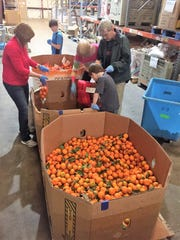 Bagging satsumas at the Second Harvest of the Big Bend warehouse