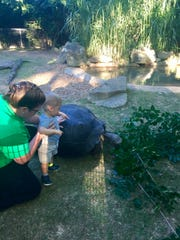 Cooper Stempson, age 1, makes friends with a Galapagos