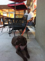 Jacob Montaño and his chocolate Labrador, Maggie, sit outside of Jimmy John's, near Sweet CeCe's and Bosque Brewing Co., on University Ave. All three places allow dogs on the outside patios.