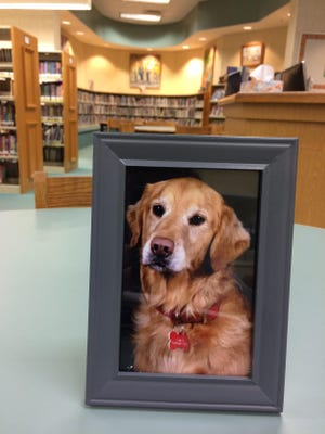 Belle, the beloved golden retriever who passed away last winter after seven years of service.