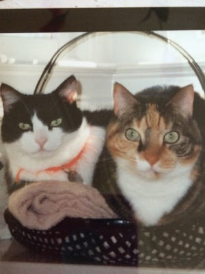 These cats await their perfect match.