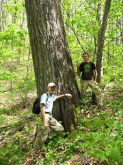 Bob Gale and Ashby Gale stand in an old-growth oak forest on Fire Gap Ridge in Nantahala National Forest.