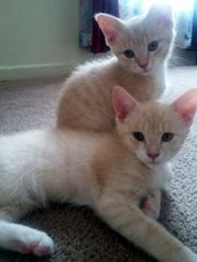 Rigsby and Tucker are adorable 2-month-old domestic