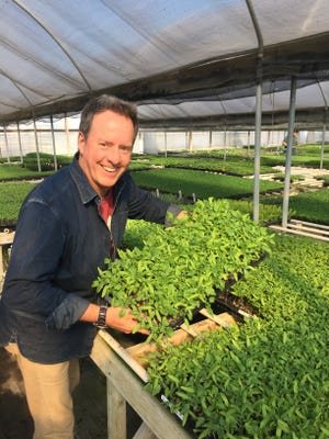Tomato grower Scott Daigre will bring his Tomatomania seedlings back for sale March 23-24 at Otto & Sons Nursery in Fillmore and March 24 at Topa Mountain Winery in Ojai.