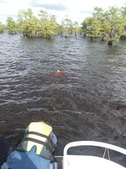 Christopher Burns and his two dogs were rescued after his boat took on water on Lake Bistineau Monday. Pictured is the tip of his sunken boat, sticking out of the water.