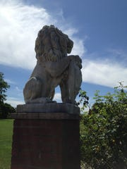 A lion in profile at the gardens.