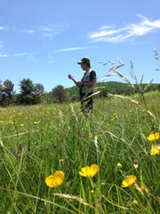 Charlie C. Nicholson evaluates Champlain Valley pollinator