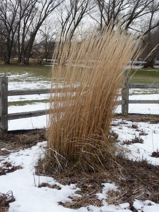 Final Ornamental Grass in the Winter Landscape.JPG