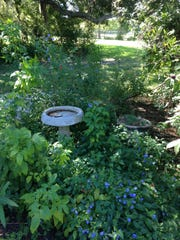 A Habitat Tour of Gardens is held at 9:30 a.m. Sundays at Manatee Park.