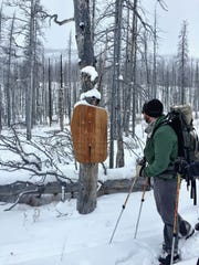 Ian Bardwell, trails manager and natural resource specialist for the Forest Service, leaves the Bob Marshall Wilderness after conducting a snow survey at Freight Creek.