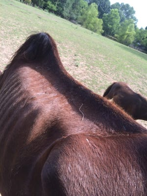 Authorities in Lauderdale County investigated allegations of neglect involving six horses.