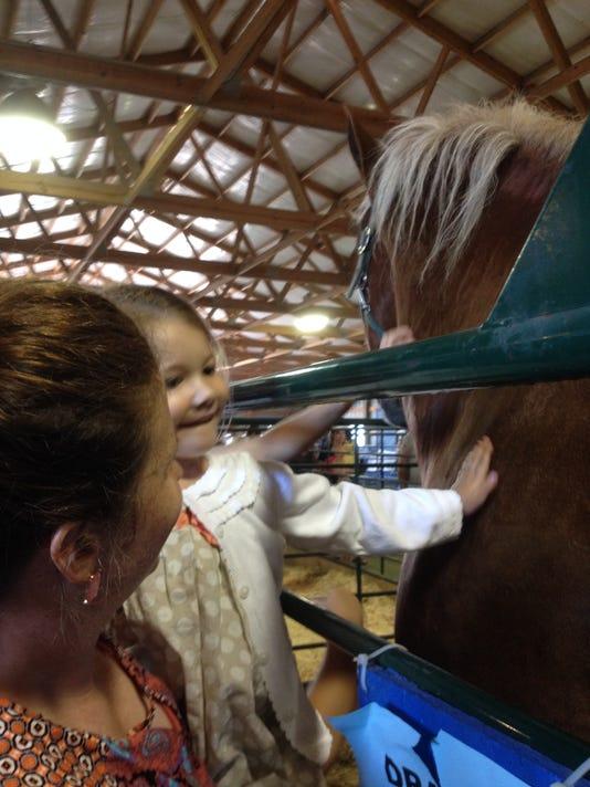 parker petting horse - state fair 2014.JPG