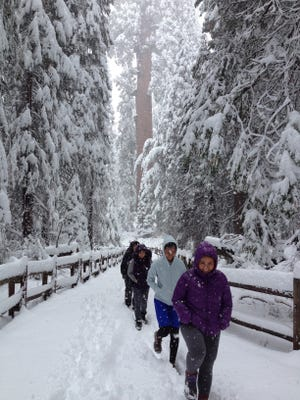 Visitors walk through snow on their way to the General Grant Tree in November. Grant Grove and the General Grant Tree, in particular, are featured on the Tulare County Treasures website, www.tularecountytreasures.com.
