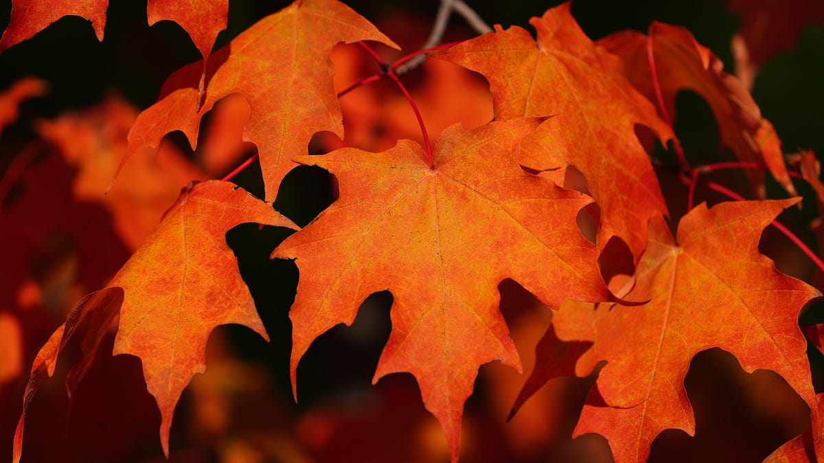 Fall foliage in New England: Leaf peeping season forecast, peak times, and best views