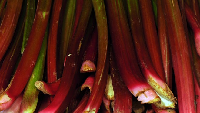A perennial vegetable, rhubarb is a cool-season plant that is very winter hardy