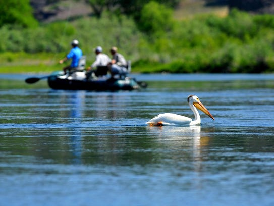 Anglers and a pelican fish the Missouri River below