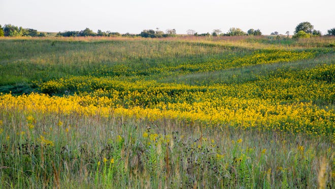 Grinnell College's Conard Environmental Research Area will close for two weeks this month for annual managed deer hunt.